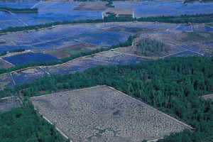 Decreasing land areas of tropical forests can contribute to climate change (Photo courtesy of The World Bank)