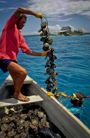 Oyster farming in the Cook Islands. (ADB Photo Library)
