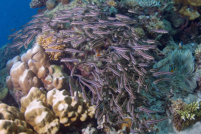 El Nido is a diver's paradise with over 447 coral species. (Photo by UNEP)