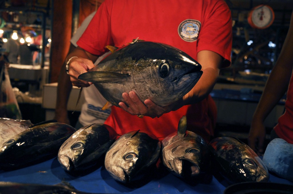 Yellowfin Tuna can tip the scales at 200 kilograms and can live over eight years. (Photo by Gregg Yan/WWF Philippines)