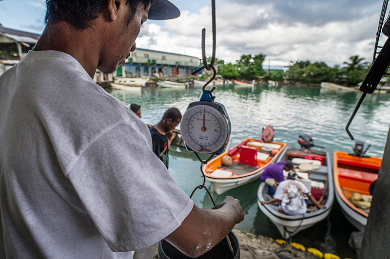 Measuring the day's catch at a fishport in Micronesia. An integrated management of the fisheries sector helps ensure sustainable practices that contributes to food security and community well-being. (Photo by Eric Sales/ADB)