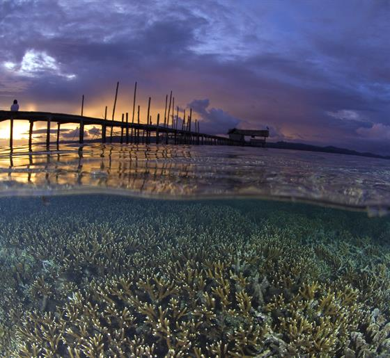 In the heart of the Coral Triangle Region. Raja Ampat, Indonesia. (Photo from: Conservation International)