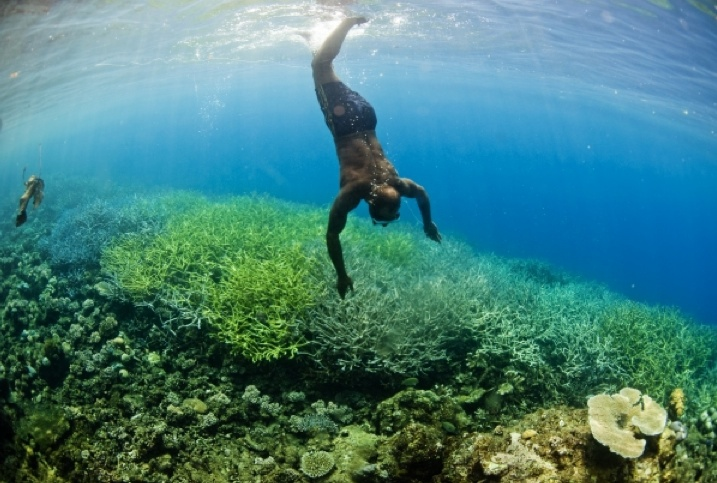 A local ranger freedives in Gizo, Western Province, Solomon Islands. The Coral Triangle is home to 76 percent of the world's known coral species and is home to the highest reef fish diversity with 37 percent of the world's reef fish species. (Photo by: CTI-CFF/James Morgan)