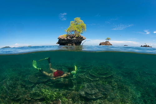 Tun Mustapha Park is almost a million hectares of coral reef, mangrove, seagrass, and valuable fishing grounds. (Photo by: Jurgen Freund/WWF Canon)