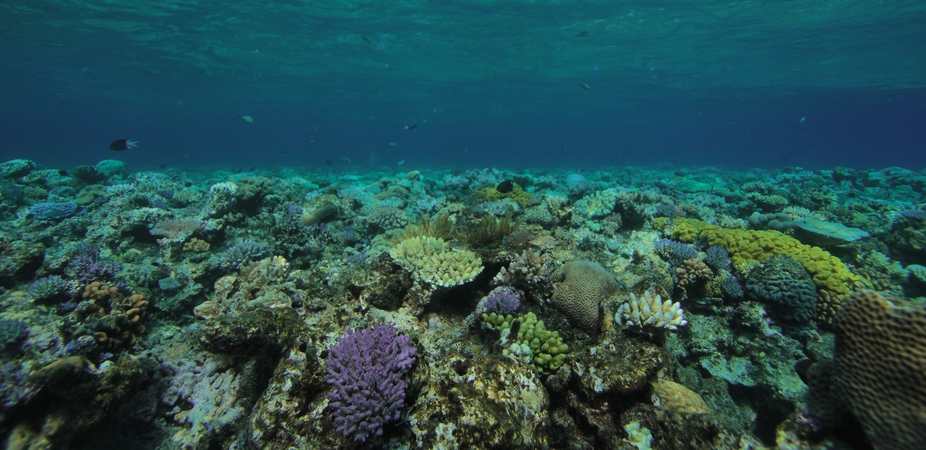 Coral reefs are like an underwater metropolis – and function in similar ways. (Photo by: Simon Gingins, CC BY-SA)