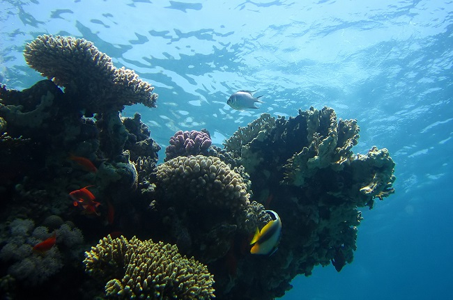 Coral is one aspect of marine life under threat from increased ocean acidity. (Photo by: V.Piazza/Climate News Network)