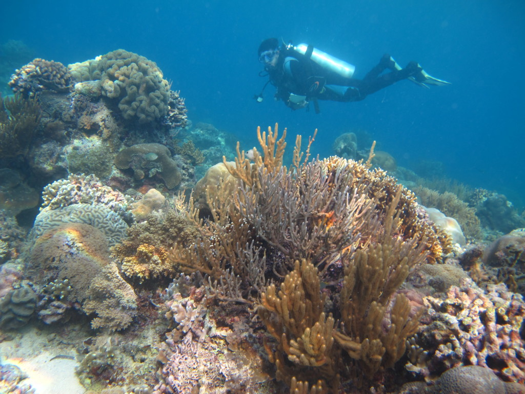 Healthy coral reef ecosystem of forgotten islands supports large schools of 'food fish' for local communities. (Photo by: WWF-Indonesia)