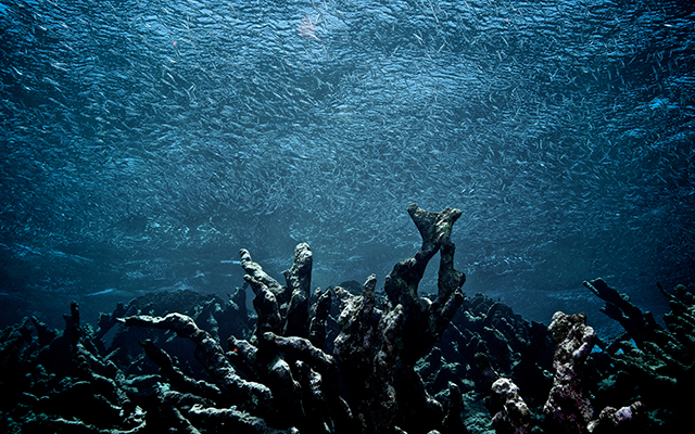 Since 2011, destruction of the oceans has not only continued, but it has increased dramatically. (Photo from: Dead Coral Reef via Shutterstock)