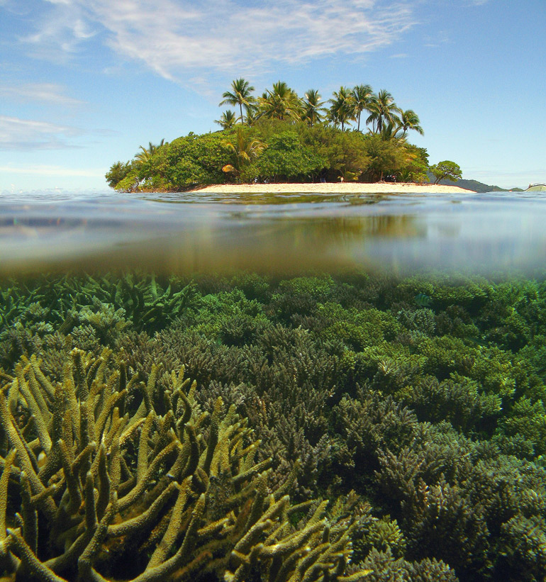 Future climate conditions are likely to increase the severity and frequency of disease outbreaks affecting coral reefs. (Photo by: Jeffrey Maynard)