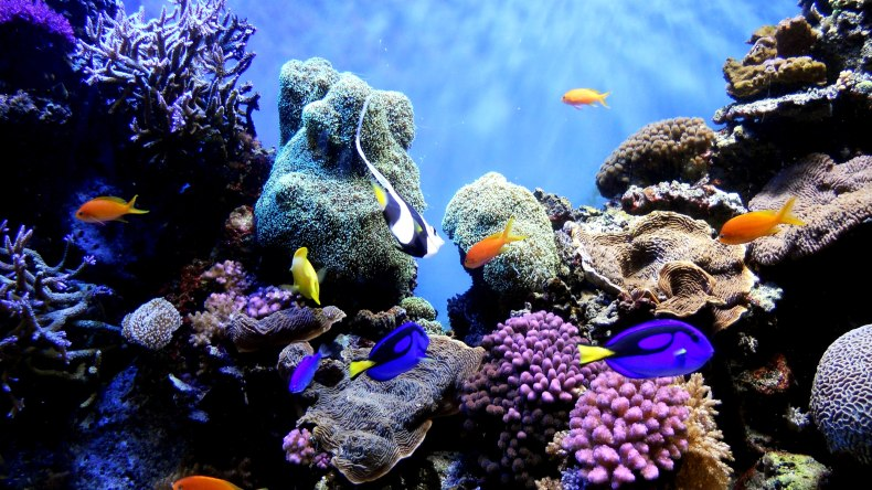 Malaysia's coral reefs are home to a stunning variety of species but remain vulnerable to adverse weather patterns. (Photo from: Wikipedia)