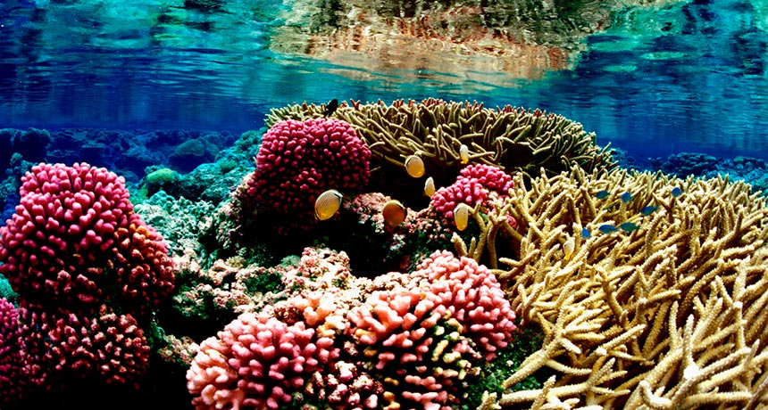 More than half of the world's coral reefs sit within a half-hour travel time of human settlements, a new study finds. But protected reefs, such as Palmyra Atoll National Wildlife Refuge in the Pacific, tend to be farther from people. (Photo by Jim Maragos/ U.S. Fish and Wildlife Service/Flickr (CC-BY 2.0))